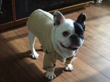 犬服-Pコート(ベージュ)size FB