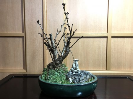 御殿場桜と釣り人形盆栽 _2